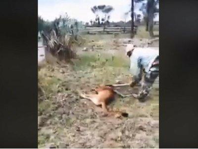 Buscan a los responsables de matar a palos a un puma