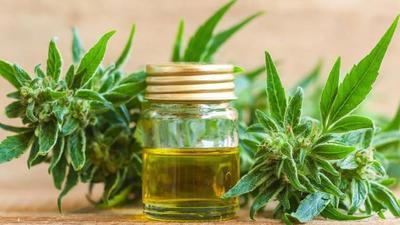 Salud entregará cannabis medicinal gratis a pacientes que lo precisen