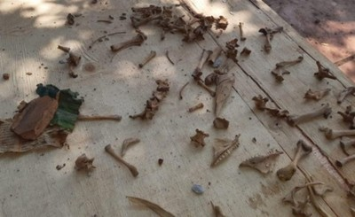 """Mas restos óseos encontrados en """"Casa del Terror"""""""