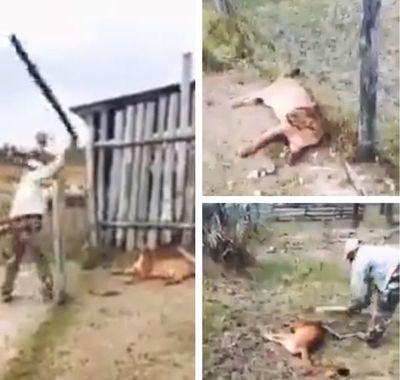 Investigan cruel maltrato y muerte de puma; multa supera los G. 1.600 millones