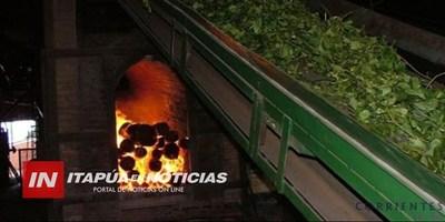 ITAPÚA PODRÍA EXPORTAR YERBA MATE A LA REPÚBLICA ARGENTINA