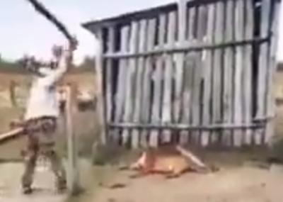 Ataque a puma: Autor se expone a multa y prisión