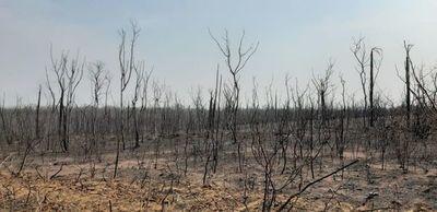 Incendios ya arrasaron casi un millón de hectáreas en el Gran Chaco