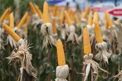 Gremio de pequeños productores agrícolas acompaña decisiones del Ejecutivo en el área