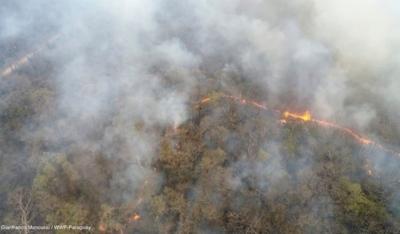 Más de 150.000 hectáreas de bosques ya fueron afectadas por incendios en Chaco