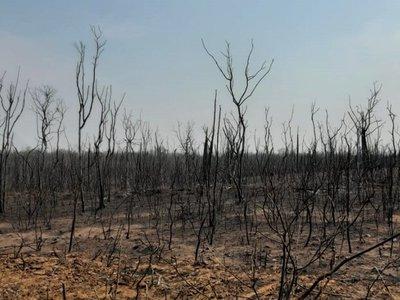 Infona investiga a 15 estancieros por incendios forestales en el Chaco