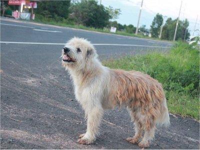 Perro se reencuentra con su dueña tras 4 años de espera en un camino