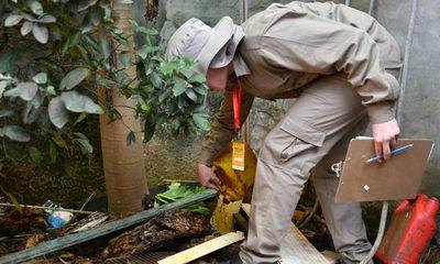 Minga Guazú con alarmante índice de infestación de dengue