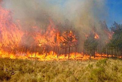 Incendios en Bolivia ya consumieron más de 4 millones de hectáreas