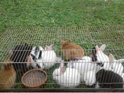 En Encarnación está prohibido tener hasta conejos