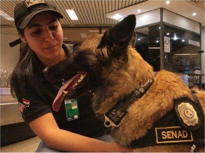 Se jubila Ala, la agente canina antidrogas