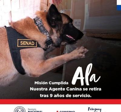 Ala, la agente canina de la SENAD, pasa a retiro con honores