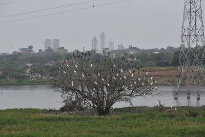 Aves copan la bahía de Asunción