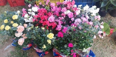 HOY / Feria en la Costanera con oferta de flores por la primavera