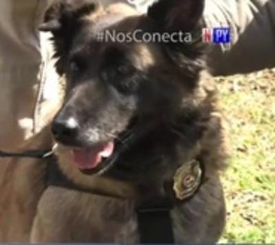 ¡Misión cumplida! Condecoran a can de la Senad