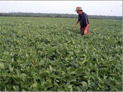 Previsión de lluvias genera buenas expectativas para el cultivo de soja