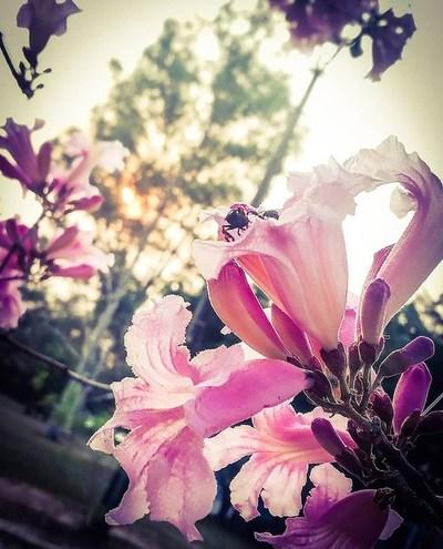 La primavera llega con clima caluroso y vientos del sureste