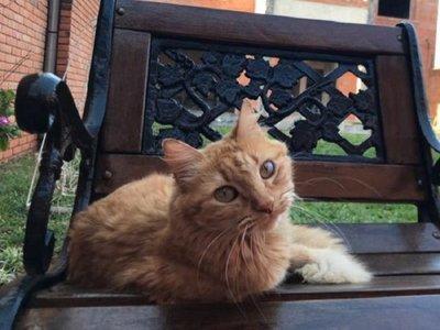 Buscan a Michifú, el gato que habría sido tirado a la calle