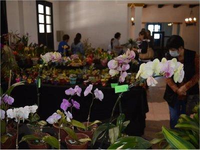 Colorida Expo Orquídeas en Encarnación