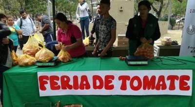 Productores de tomate ya vendieron 10.800 kilos y ferias continuarán durante el fin de semana