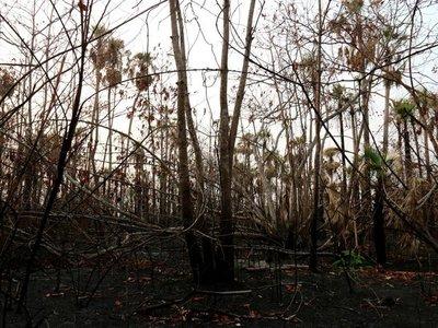 Incendios desplazan a la última comunidad indígena en aislamiento del país