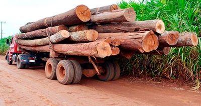 Extracción de rollos de la reserva Morombí  se convierte en millones