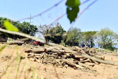 Talan casi 200 árboles para la construcción de un súper