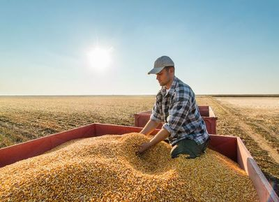 CIC recorta pronóstico producción mundial de maíz 2019/2020