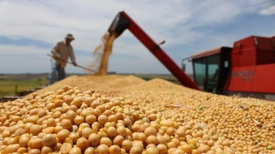 Hasta agosto de este año y frente al año pasado los ingresos por exportación de soja cayeron en unos 250 millones de dólares