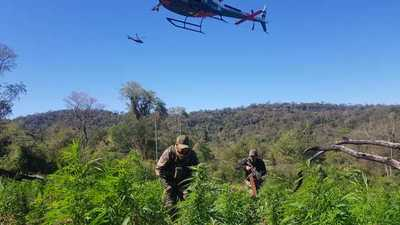 Paraguay y Argentina eliminan 493 toneladas de marihuana en 10 días