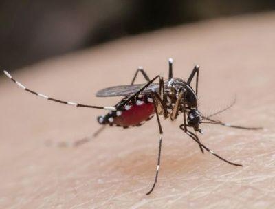 """""""Si volvemos a tener dengue el riesgo de complicaciones aumenta"""", aseguran"""