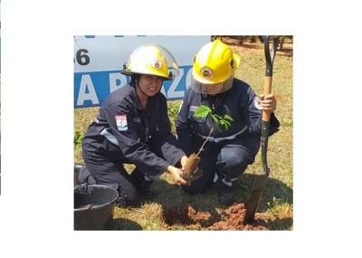 Horqueta: Bomberos fomentan reforestación