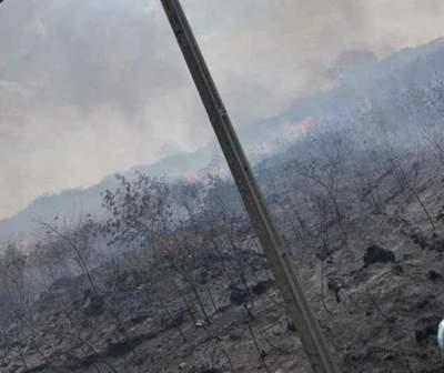 Fuego arrasa con el Parque Guasu
