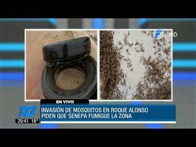 Plaga de mosquitos en Roque Alonso