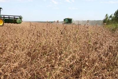 HOY / Lluvias son insuficientes para cultivar y hay malos pronósticos para el agro