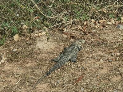 Piden no perturbar a los animales silvestres tras incendio en Parque Guasú