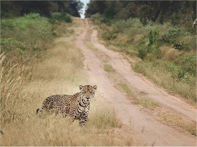 En el Día Mundial de los Animales instan a respetar la vida silvestre