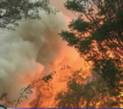 Más de 320 mil hectáreas se perdieron en el Chaco