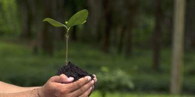 Parlamento analizará el Acuerdo de fondo para reforestación
