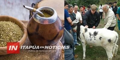 CNEL. BOGADO SE PROYECTA COMO DISTRITO PRODUCTOR DE LECHE Y YERBA MATE