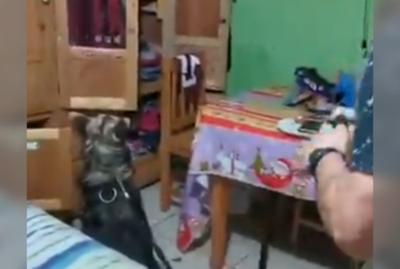 """La hazaña de """"Zac"""", el can que dio paso a una gran incautación de drogas"""