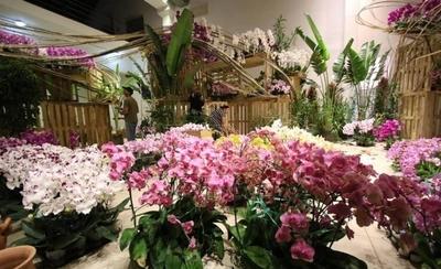 HOY / Taiwán tratará de ampliar en Paraguay la industria de la orquídea