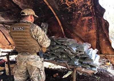 Destruyen 22 campamentos narcos en Amambay