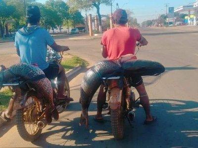 Surubís sobre moto causan furor en Concepción