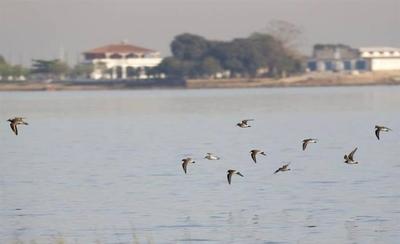 HOY / La plaga del plástico que ya  azota al país: aves afectadas  muestran arista letal de problema