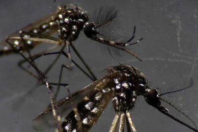 Dengue: van en aumento las notificaciones en Asunción y Central