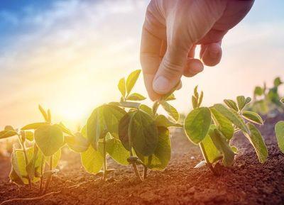 Las perspectivas climáticas son alentadoras para la producción