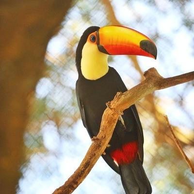 Itaipu fue admitido como miembro de la Asociación Latinoamericana de Parques Zoológicos