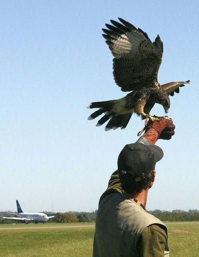 Los aeropuertos en busca de soluciones contra aves
