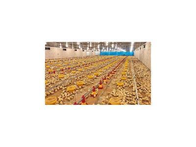 Moderno galpón para la cría de  pollos